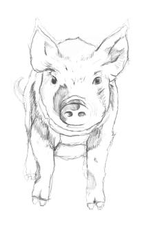 pig_bak