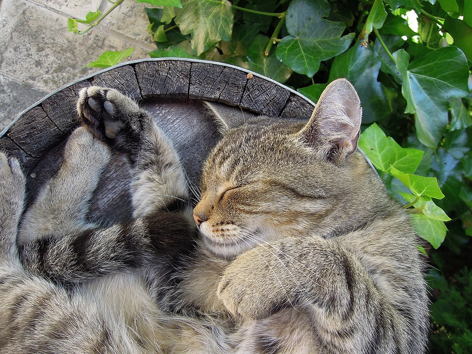 cat-2395102_960_720